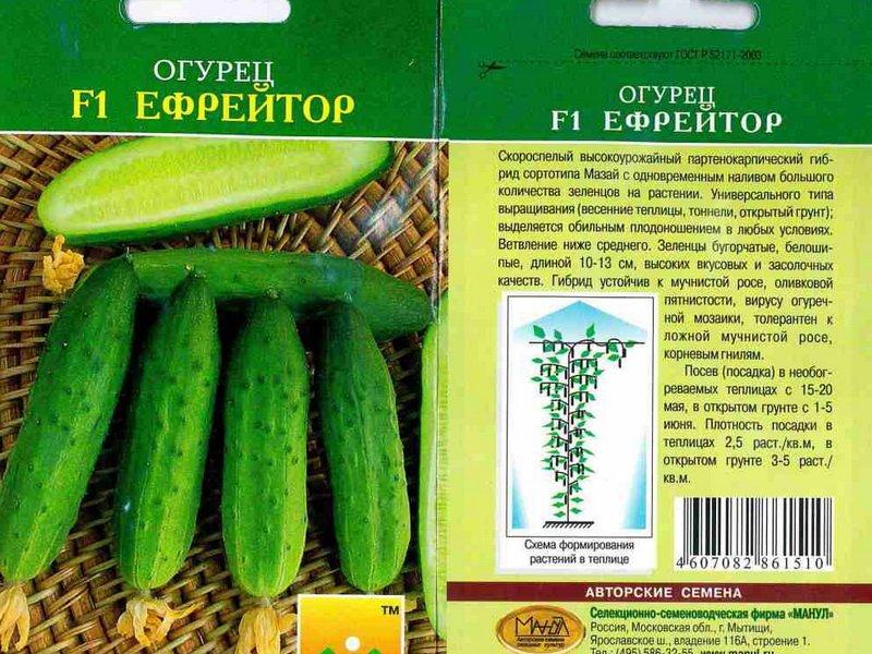 Семена огурца «Ефрейтор» F1 на фото