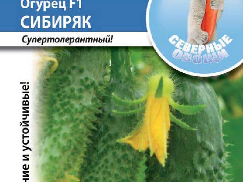Семена огурца «Сибиряк» F1 на фото