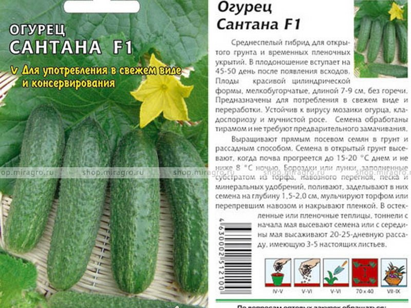 Семена огурца «Сантана» F1 на фото
