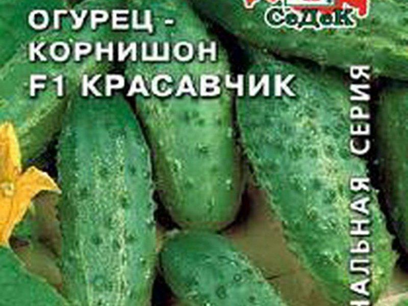 Семена огурца «Красавчик» F1 на фото