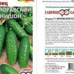 Как посадить и вырастить огурцы сорта Семкросс