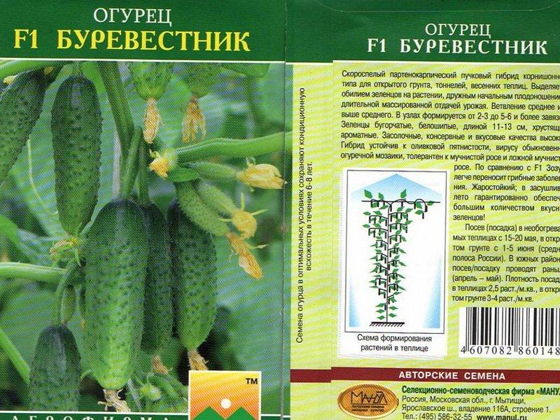 Семена огурца «Буревестник» на фото