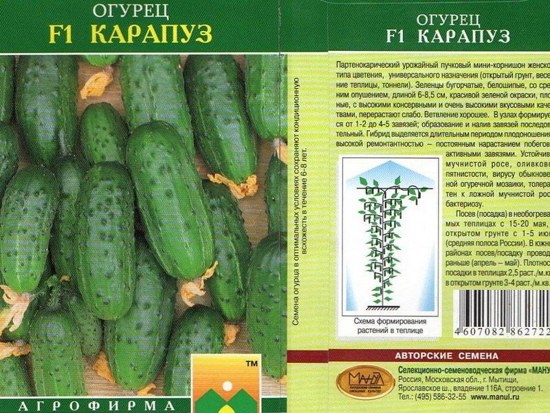 Семена огурца «Карапуз» на фото