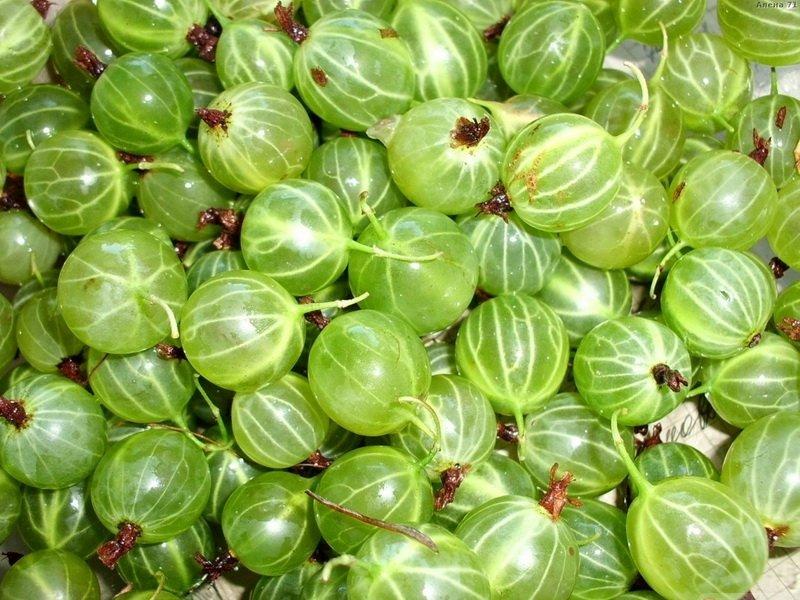 У крыжовника  «Хаутон»  ягоды мелкие, округлые, гладкие на фото