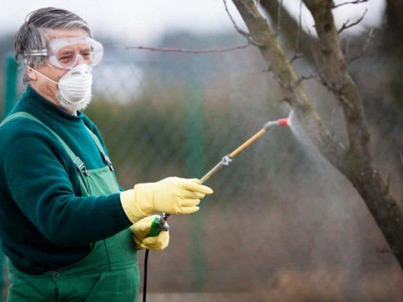 От болезни парша нужно опрыскивать деревья (фото)