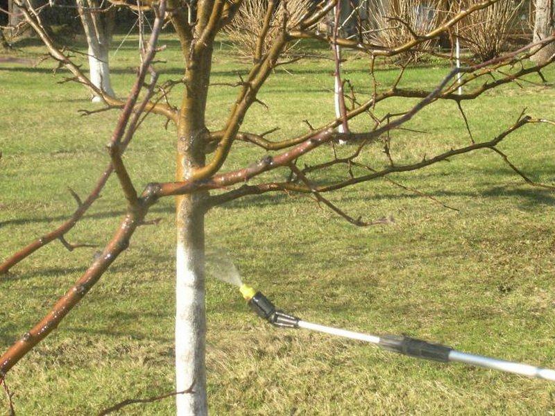 От болезни плодовая гниль нужно опрыскивать деревья (фото)