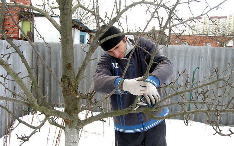 Как правильно ухаживать за садовыми деревьями