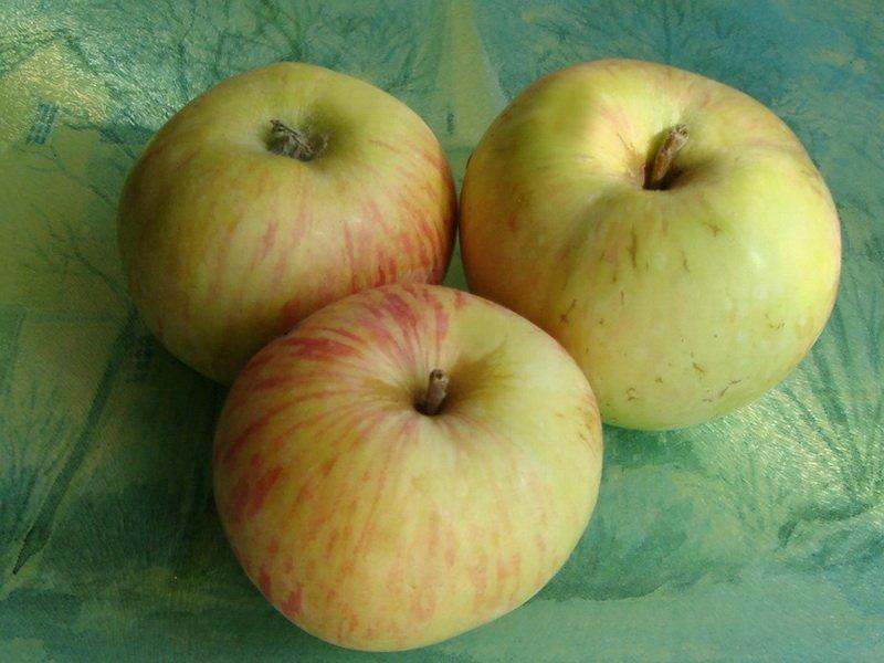 """Плоды яблони """"Мальт крестовый"""" на фото"""