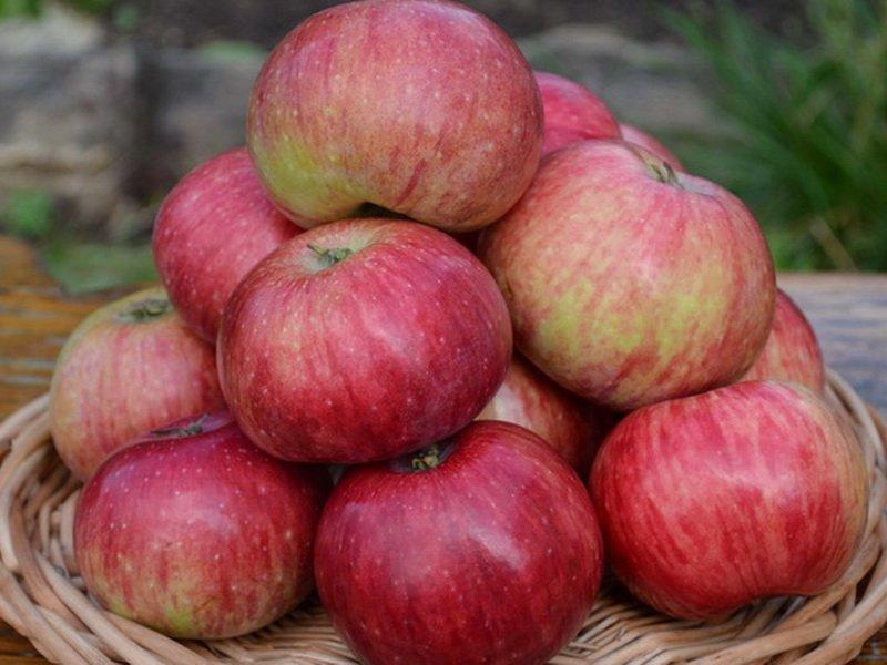"""Плоды яблок """"Анис"""" плоскоокруглые, слабоконические (фото)"""