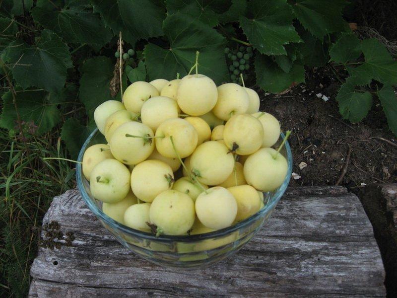 """Плоды яблони """"Китайка Санина"""" на фото"""
