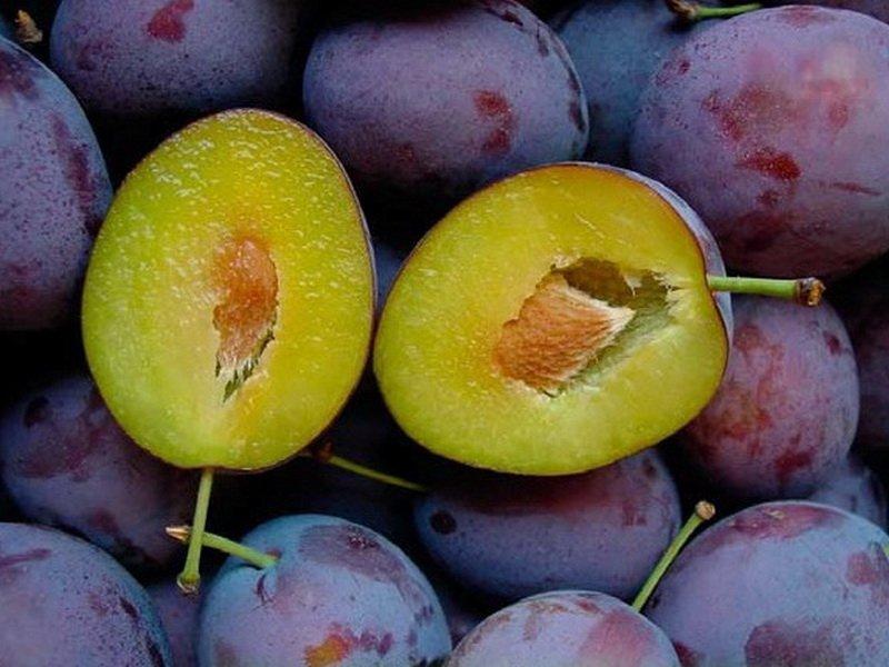 Плоды овальные, темно-фиолетовые, с среднегустым восковым налетом (фото)