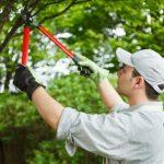 Обрезка плодовых деревьев на фото