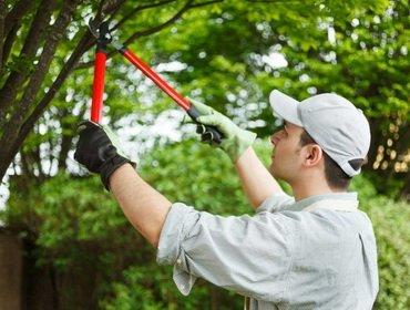Обрезка плодовых деревьев: основные правила и приемы