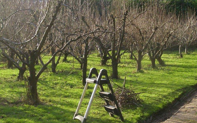 Общие принципы и правила обрезки плодовых деревьев своими руками