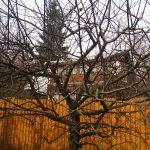 Когда обрезают плодово ягодные деревья