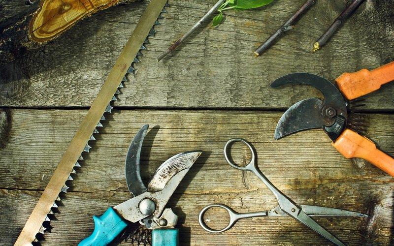 Выбор инструментов для обрезки плодовых деревьев: советы начинающим