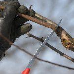 Виды и правила обрезки плодовых деревьев - Огород, сад, балкон