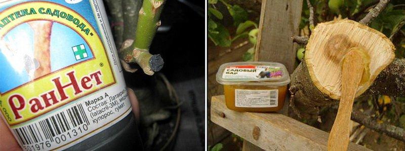 Необходимый инвентарь для обрезки плодовых деревьев