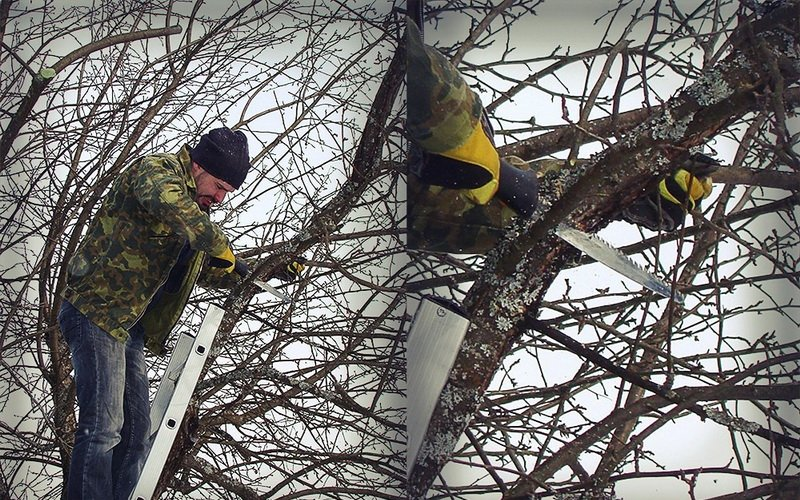 Виды обрезки плодовых деревьев: санитарная, формирующая и омолаживающая фото