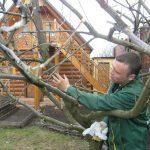 Строение дерева. Веточки деревьев для детей