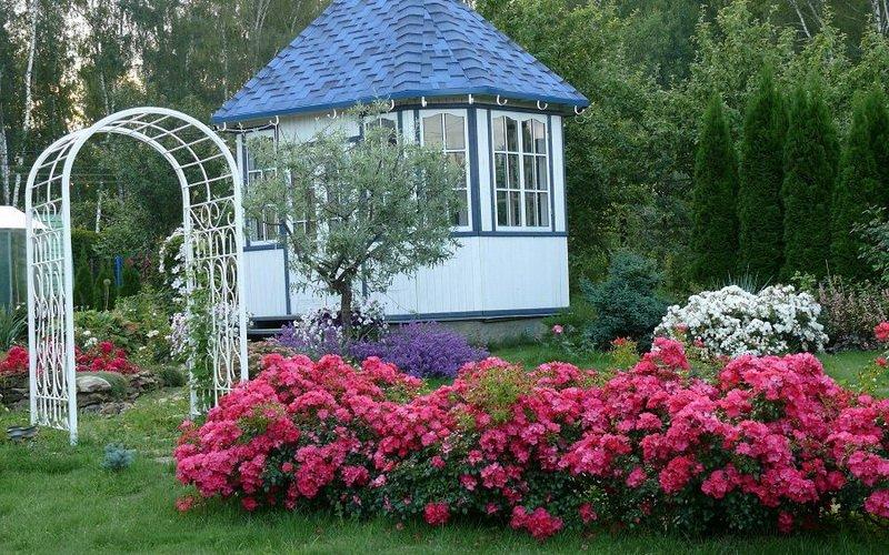 Группы почвопокровных роз в ландшафтном дизайне (с фото) фото