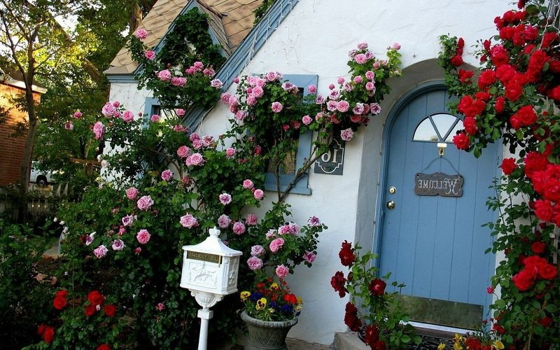Миниатюрные розы в ландшафтном дизайне (с фото) фото