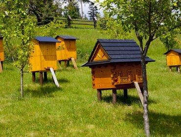 Биологические и биохимические особенности пчел