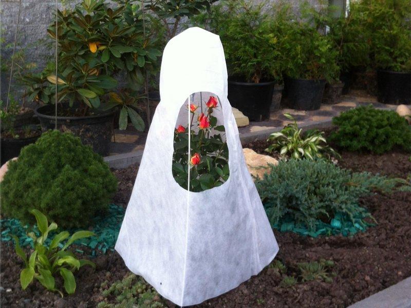 На фото укрытие роз на зиму