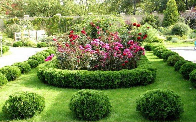 При этом общая картина розария выглядит участками чисто белых, чисто розовых, чисто красных или желтых роз на фото