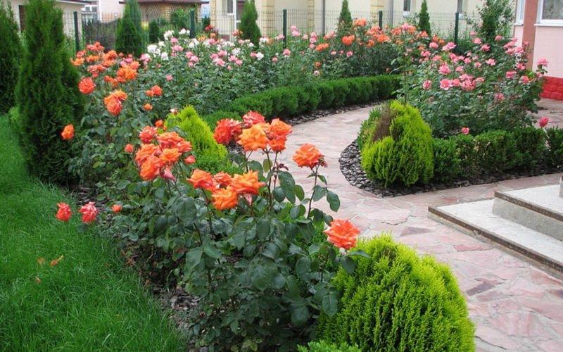 Как красиво оформить розарий на даче