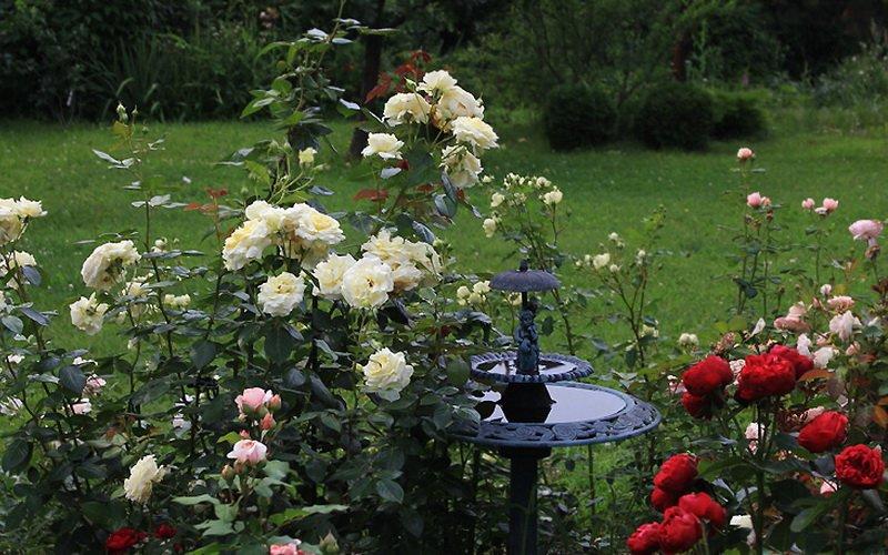 Белые розы гармонично сочетаются со всеми цветами радуги на фото