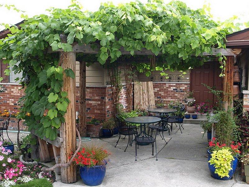 Стены террасы можно украсить вьющимися растениями и цветами на фото