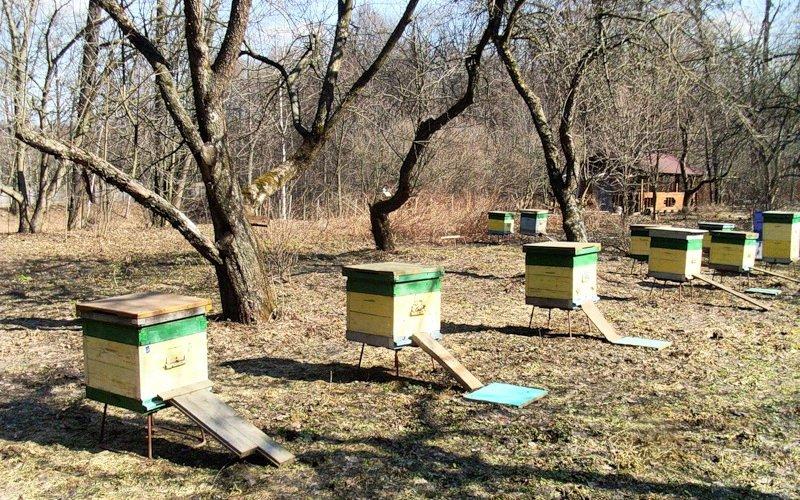 Когда начинать выставку пчел в центральной полосе России?