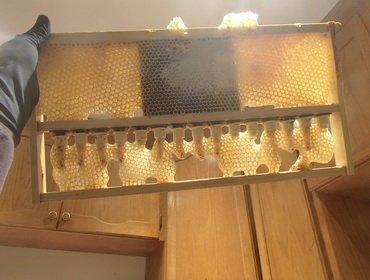 Геометрия пчелиных сот: размеры и форма ячеек