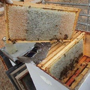 Виды и размеры пчелиных сот