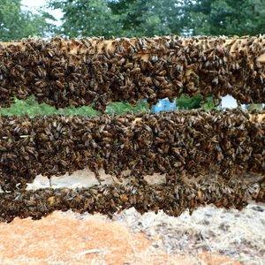 Виды и размеры пчелиных сот фото