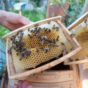 Как развести пасеку: требования к пчелиным семьям