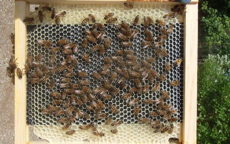 Как устроен улей для пчел: основные структурные элементы