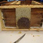 Параметры устройства пчелиного улья - Бабушкина дача