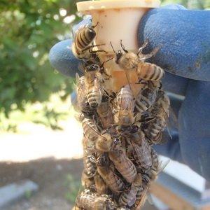 Какие должны быть ульи для пчел фото
