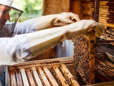 Содержание пчел в многокорпусных ульях: как сделать своими руками, чертежи