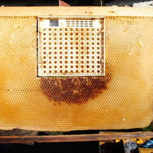Содержание пчел в ульях с вращающейся круглой рамкой