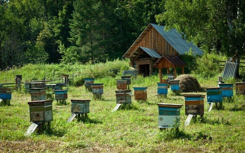 видео пчеловождение в ульях лежаках