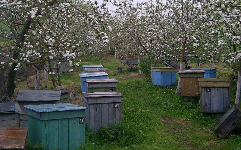 Какие первые работы производят весной перед выставкой пчел?