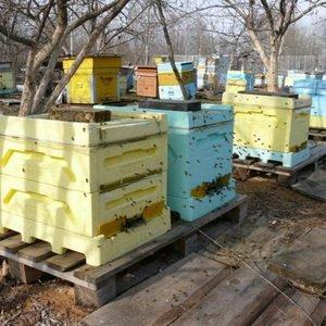 Какие первые работы производят весной перед выставкой пчел? фото