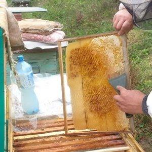 Содержание пчел весной: сокращение пчелиного гнезда
