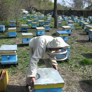 Весеннее расширение пчелиного гнезда корпусами