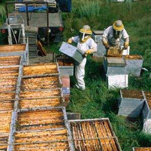 Весеннее расширение пчелиного гнезда корпусами фото