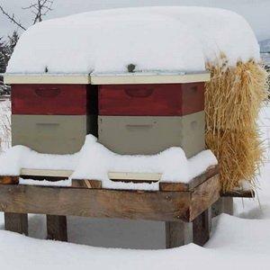 Содержание пчел для начинающих: условия зимовки