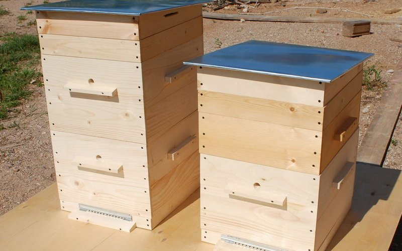 В каких ульях лучше содержать пчел начинающим пасечникам?